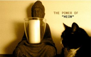 The Power of MEOW.  Foto: Lilian Güntsche